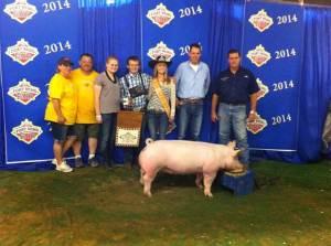 FFA Fair Results - Pig